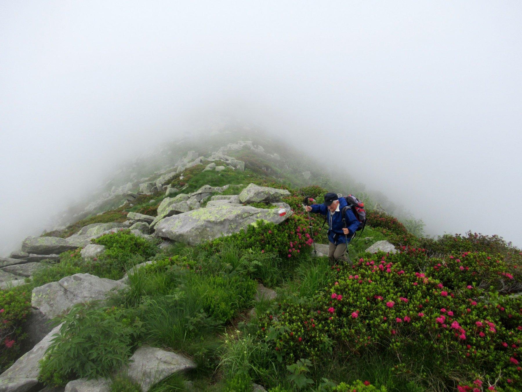 Sulla dorsale tra la nebbia