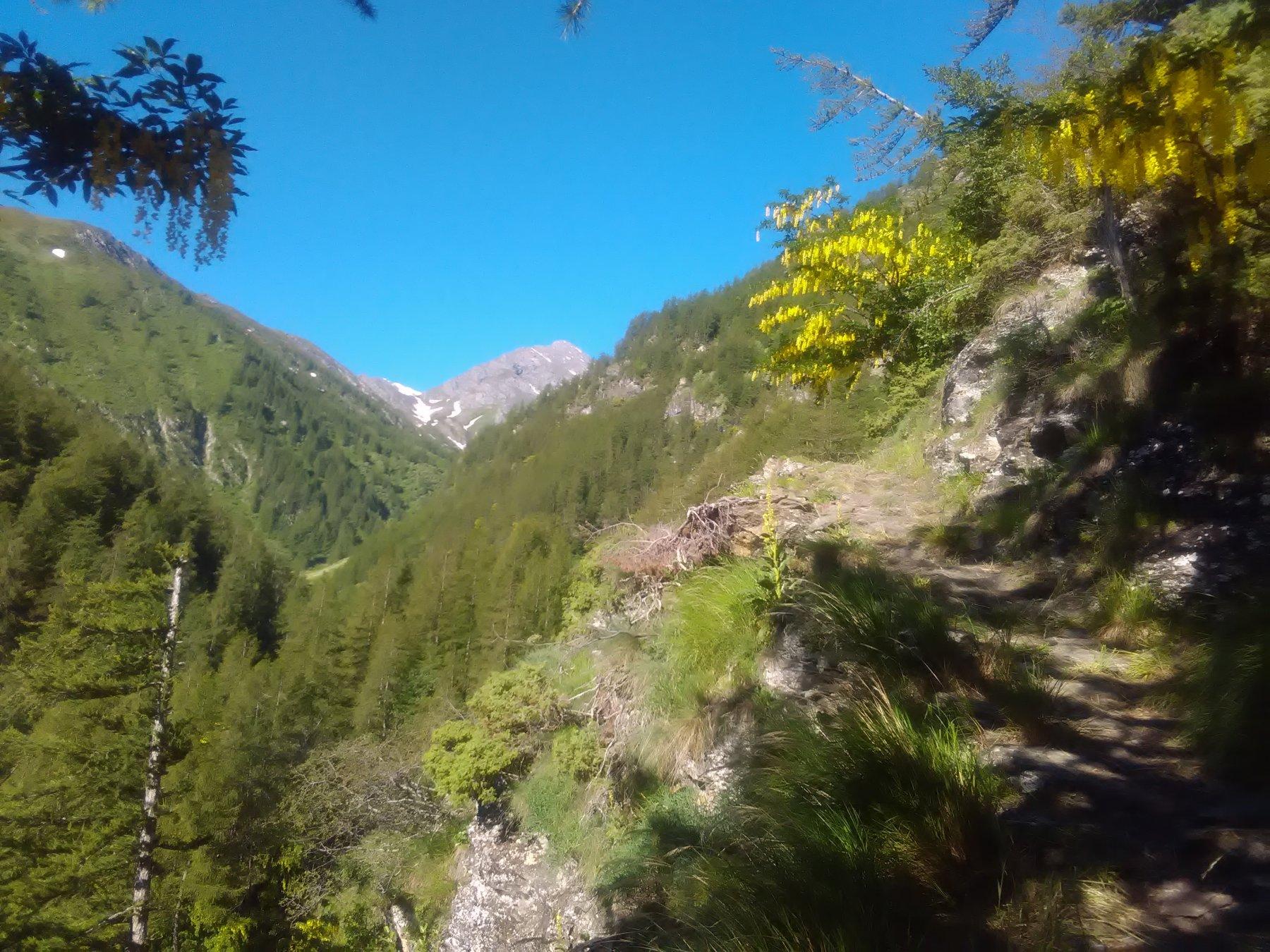 Pignerol dalla mulattiera per gli alpeggi