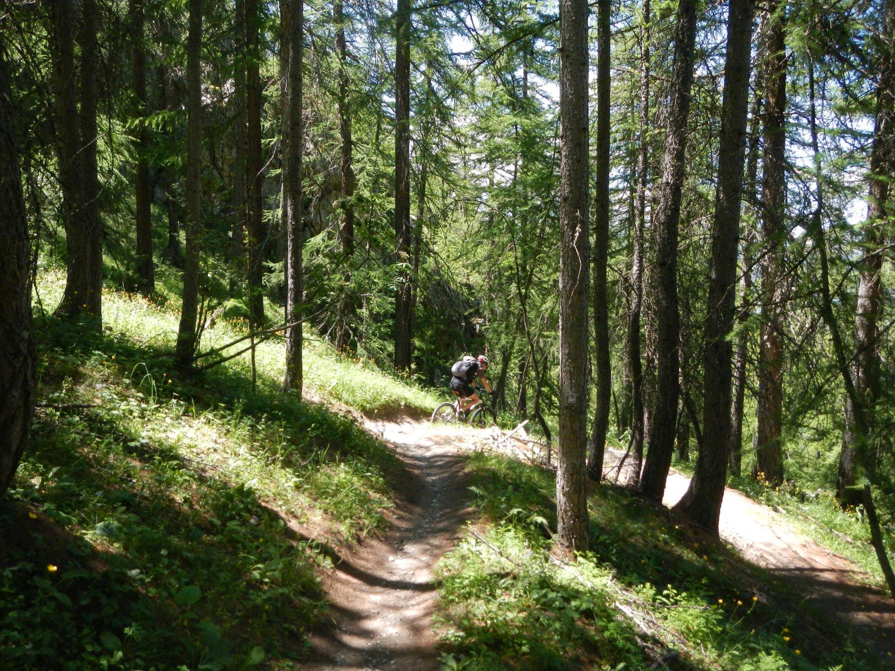 il lungo single track nel bosco sotto le Melézin