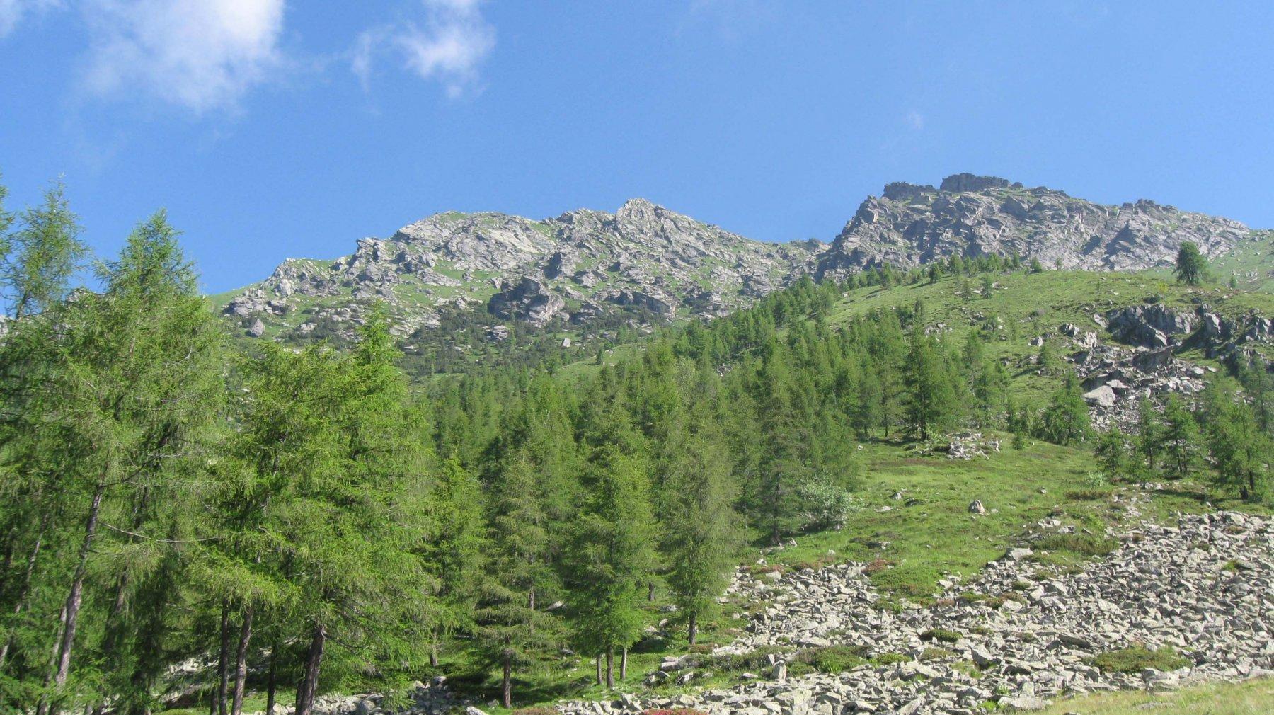 M. Dubia 2463 m.