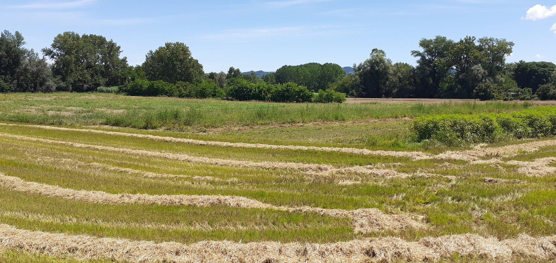 Paesaggi bucolici tra Castiglione e Settimo Torinese