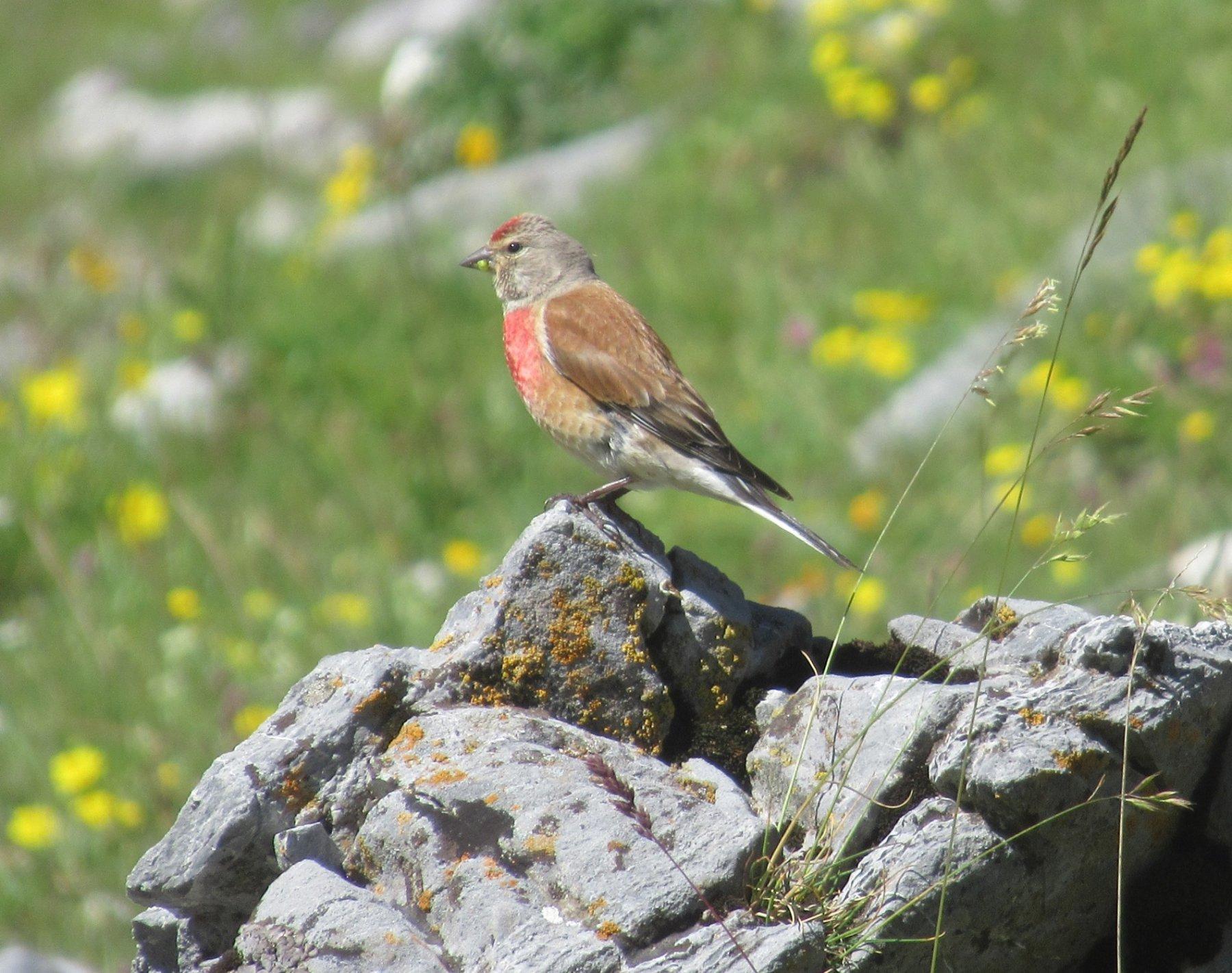 Un bel uccellino colorato ma non so il nome