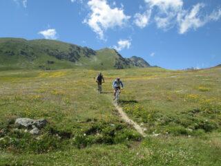 il bellissimo sentiero sotto l'alpe Tsa Fontaney