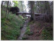 Il bosco ha ancora qualche albero abbattuto