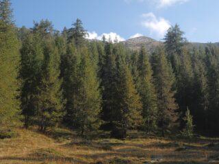 La cima vista dalla via di salita tra A.Marco e la Colla