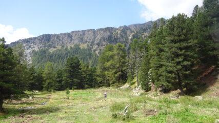 Correndo nel bosco dell'Allevé