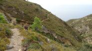 Dal Semaforo si prende il sentiero tra la macchia mediterranea che scende a P.ta Libeccio.