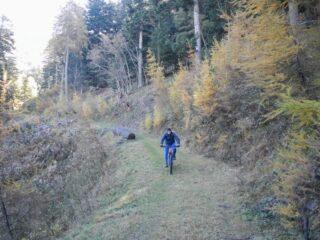 leggera discesa verso il bivio con il sentiero n. 12