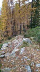 sentiero boschivo