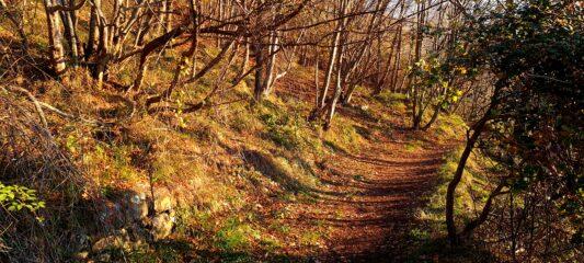 i colori autunnali lungo il sentiero che porta alla Gola di Sisa