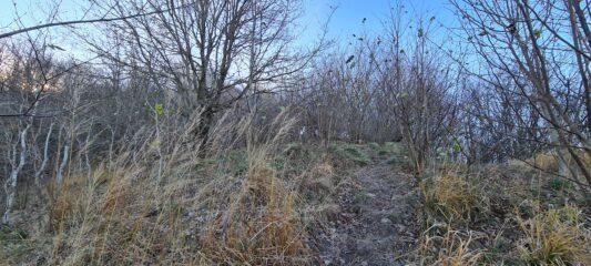 vegetazione fitta prima di uscire in cima