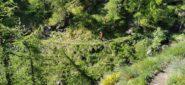 primo tratto di avvicinamento al Sentiero degli Alpini