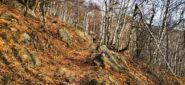 il primo tratto nel bosco sopra San Giacomo di Andrate