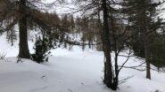 Nel bosco (foto F. Maso).