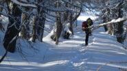 ultimo tratto di percorso nel bosco prima di uscire in cima