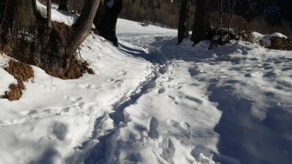 Il sentiero che da Arbetey scende a Prarion, perfettamente percorribile