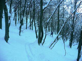 Bosco tenebroso nel tratto nord tra Rocche di S.M. e Balmassa.