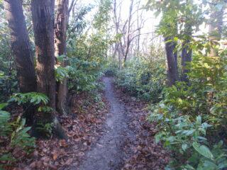il sentiero 10 che si insinua nel bosco..