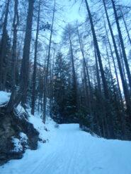Sulla strada nel bosco