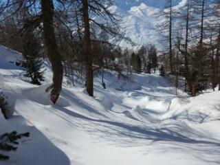 gran bella neve nel bosco