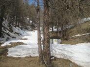 canalino nel bosco
