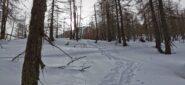 in discesa nel bosco verso la strada militare ed il pianoro di quota 1760 m