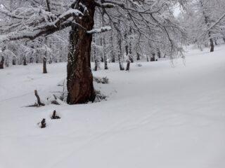 Tratti nel bosco da tracciare
