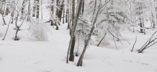 l'aspetto quasi magico del bosco dove si sale