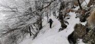 una parte del lungo traverso con saliscendi nel bosco che riporta al bivio con il sentiero della