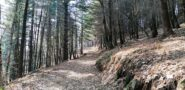 la bella pista forestale