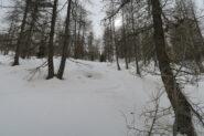 farinosa anche nel bosco sopra Cheneil
