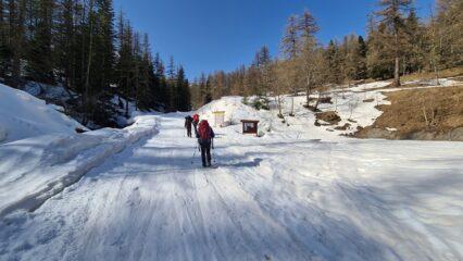 iniziando a risalire la pista forestale verso il Bosco delle Navette
