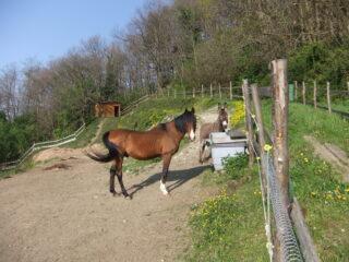 Equini all' Osteria dell' Azenetto
