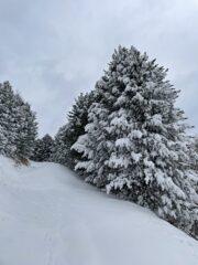 Scorci invernali.