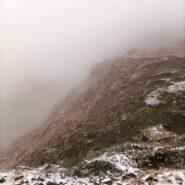 Stambecchi nella nebbia