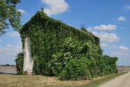 Chiesa alla C.na Bosco inghiottita dalla vegetazione