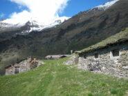 l'Alpe Arcella 2008 m.