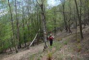 Nel bel bosco verso Col cresta