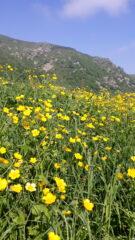 Bellissime fioriture