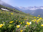panorama verso le cime più alte delle Liguri