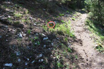 Il bivio con l'indicazione (freccia) da non seguire; proseguire invece diritto sul sentiero marcato e pulito