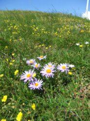Prati fioriti sotto le pale eoliche