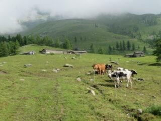 all'Alpe Pian Pra, m. 1783