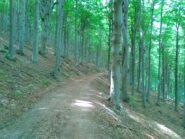verso la casa Forestale
