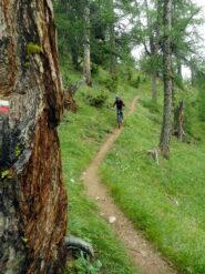 nel magico bosco sopra Soulieres
