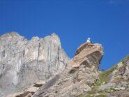 Le due cime della Rocca Bianca ,salendo al Colle St.Veran