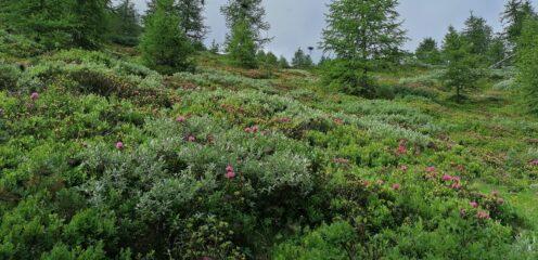 Usciti dal bosco bella fioritura