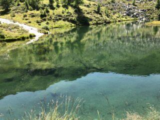 lago layet