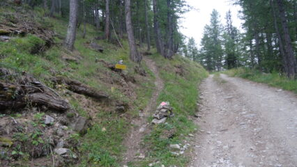 inizio sentiero nel bosco