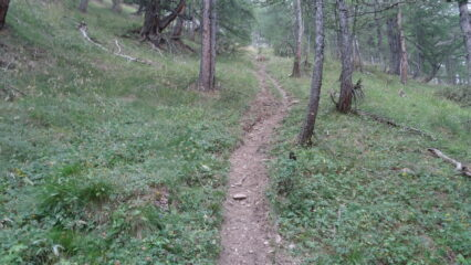 parte ripida sentiero nel bosco